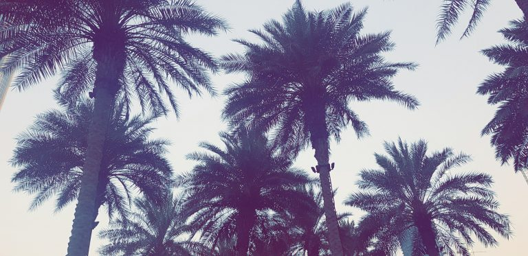 palm wallpaper 127